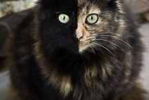 Here kitty kitty. / by Ali Aynsley