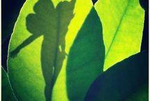 Fairies & Magical Creatures