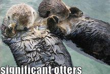 A:ll kinds of cute animals / by Allissa Buseman