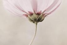 Kukka/luonto