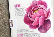 Flowers to draw