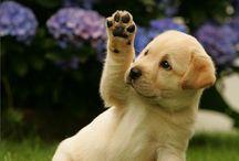 Funny & Cute Dog