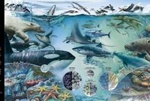 Animales infograficos