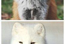 amazing nature/animals