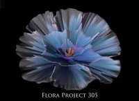 Fantasy Flora / FLOWER PAINTING / by Margo Nahas