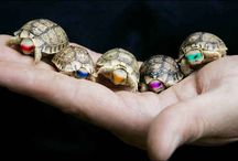 Teenange Mutant Ninja Turtles :0 / I like Turtles <3