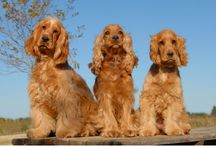 Pet Training / Train your Pet with the help of vet Doctors.Groom your Pets Regularly So that pet will be Happy.