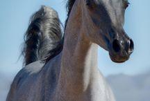 Amezing horses I love it
