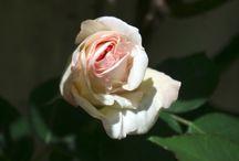 In giardino / I fiori del mio giardino