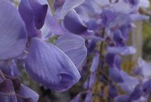 photographie fleure par lofrade-photographie