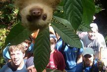 sloths omg