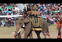 งานช้างสุรินทร์ Surin elephant festival