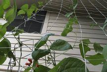 Sustainable Home & Garden