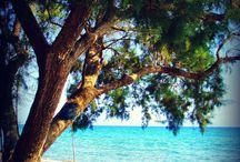 Δάφνη, Ζάκυνθος / Dafni, Zakynthos / http://elenitranaka.blogspot.gr/2015/05/dafni-zakynthos.html