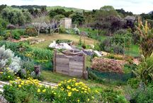 permaculture et potager