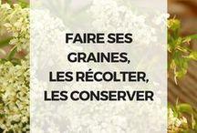 recolter ses graines  potager et fleurs