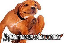 Дерматология собак и кошек