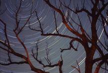 star trails / by Denise Cicuto