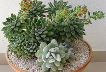 composizioni piante e fiori