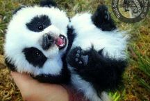 cute animals. / I just can't resist this cuteness.