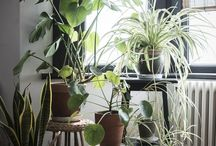 Plants/stands to fill a void