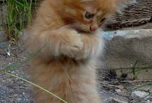 katten en kittens