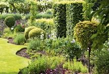Gardening/Landscaping / by Teresa Langley