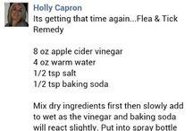 flea remedy
