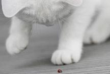 Pets / by Connie Gunter-Miller