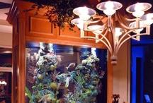 Aquariums / by MeMaw