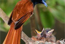 Doğadan kuşlar
