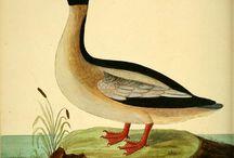 Птицы земли