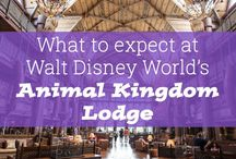 WDW Resorts - Animal Kingdom Lodge / Animal Kingdom Lodge - could it be the best place to stay in Disney?  Check out these pins and decide for yourself!