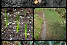 Menanam pertanian