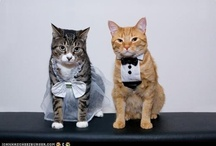 Wedding Lulz / Funny stuff, Cats and weddings, the internet's first love... / by Wedding Sparklers USA