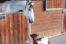 Really funny horses