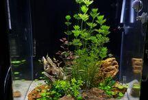 akvária