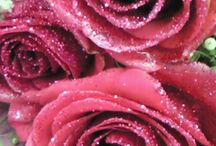 Frosty Roses / Glittered and brilliant roses