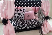 Little and big dog beds and other stuff
