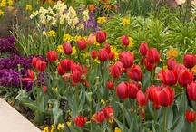 Seasonal Landscapes / by Chicago Botanic Garden