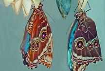 Butterflies / by Lewis Ginter Botanical Garden