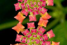 Nature et géométrie / Références graphiques, artistiques, scientifiques, fractales, ...