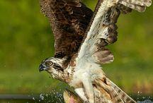 Album Eagle