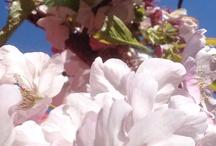 Flowers / by Renee Schroyer