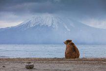 где-то там грустит один медведь...