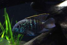 Fish Wishlist