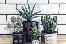 [Plantas]