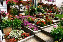 jardineria / plantas-decoración de jardines / by Marta Beatriz Cejas
