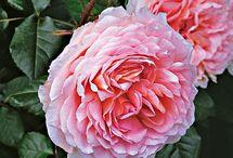 Flowers / by Debbie Cowart Law