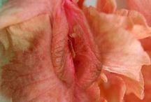 SEXY Natura